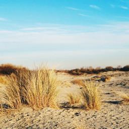 freetoedit beach dunes bluesky nature