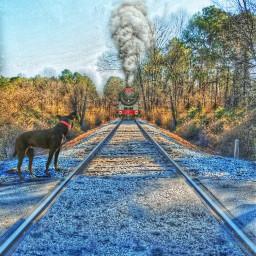 railroadtracks train dog sunnyday madewithpicsart freetoedit