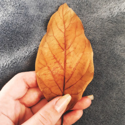 freetoedit hand leaf blue fall