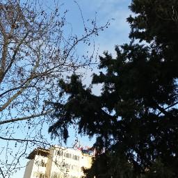 freetoedit backgrounds girl raven sky karga blue a manzara tree wiew perfect beautiful t g enc photo world hospital branch Atmosphere hava t t t