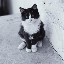 peace cat love riyadh pic freetoedit