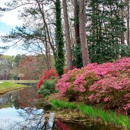 freetoedit colorful azaleas creek lake