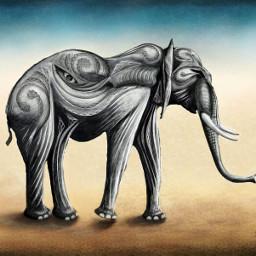wild drawing animal dcwildanimals elephant
