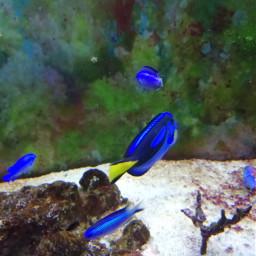 fishes animals