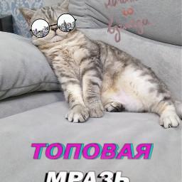 freetoedit кот кошка котик котэ