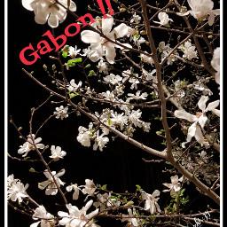 freetoedit gabon buenas goodnight