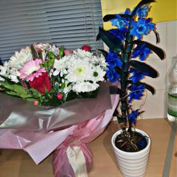 happy woman flowers niceday nicepeople