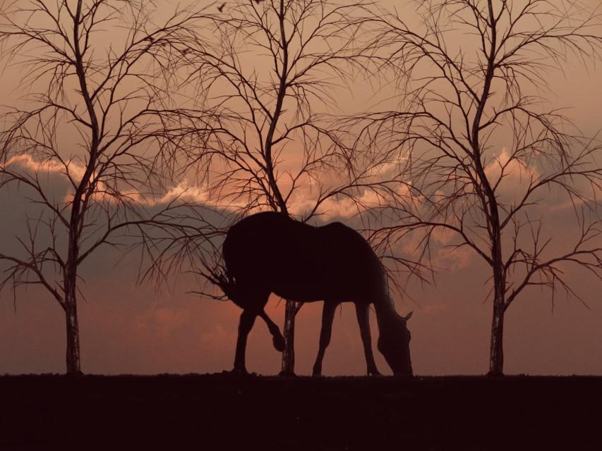 #freetoedit #sunset #silhouette #horse #ivoryeffect #easyedit #my