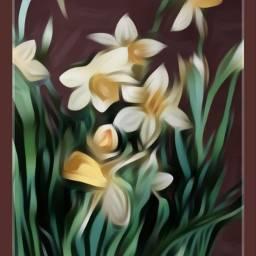 plantsandflowers flowers blossom yellow narcissus