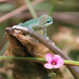 freetoedit flowers bright inmyneighborhood lizard