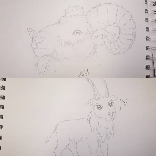 There was this little girl at the airport who saw me sketching and wanted a billy goat. Unfortunately i couldn't sketch one up fast enough as she had to catch her plane💔💔💔 Second image was one she picked from the internet, its the one where i tried to rush asap 😊 the first is one i sketched on the plane, she was upset that she couldn't get her drawing asap so i said I'd draw 2 for her❤🤟🏻🐐 #goat #sketch #illustration #drawing #tradionalart #pencildrawing #art #sketching #animals   #freetoedit
