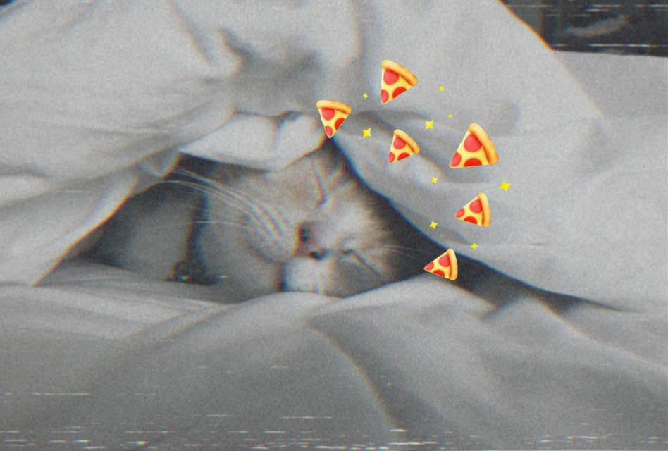 #freetoedit #cat #catcute #cute #cuteandkawaii #kawaii #kawaiicat #catlove