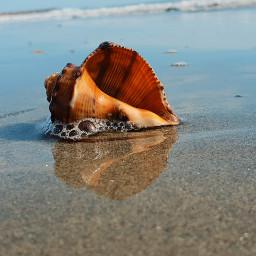 shell sea riflesso mypic freetoedit