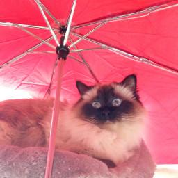 pcumbrellasisee umbrellasisee