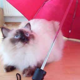 pcvacationselfie vacationselfie pcumbrellasisee umbrellasisee