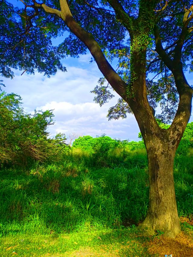 #freetoedit #myclick📷 #photography #edited#myedit#madewithpicsart #neighborhood  #picsarteffects #coloreffect #nature #green #landscape #sky #tree #branch #grass#morning #clouds