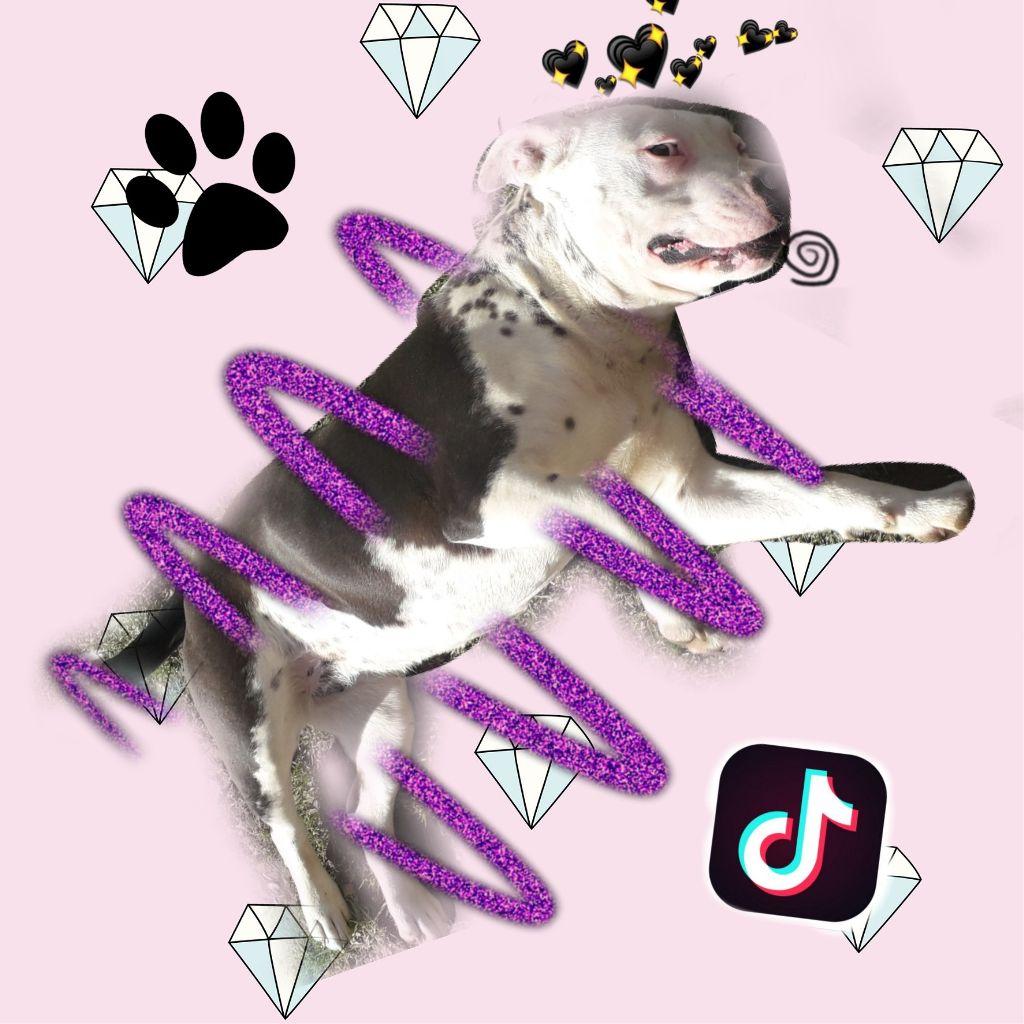 #kis kutyán