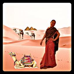 editedbyme camel photograph