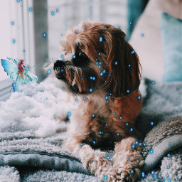freetoedit madewithpicsart picsart photgraphy dog