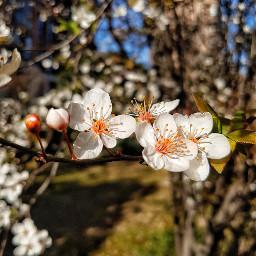 plumblossom shanghai spring flowers nature