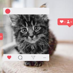 freetoedit cat instagram post like