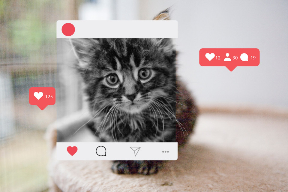 #freetoedit #cat #instagram #post #like #love
