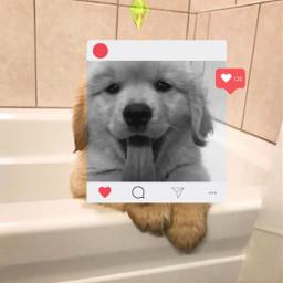 freetoedit cute puppy dog instagram