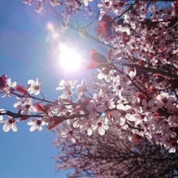 freetoedit backlight spring