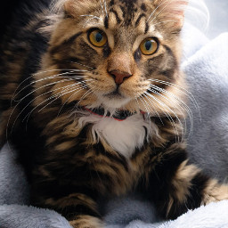 freetoedit cat mycat love