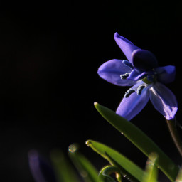 freetoedit spring springtime springishere inmygarden