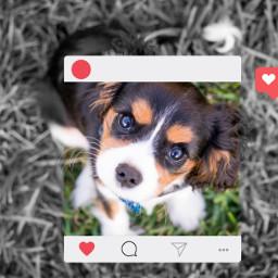 freetoedit puppy love instafram frame