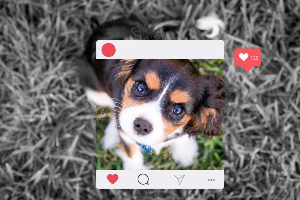 #freetoedit #puppy #love #instafram #frame #react