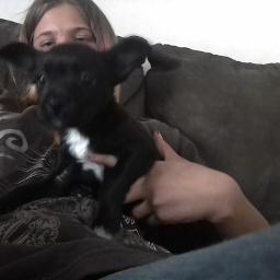 pcpuppy puppy