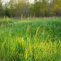 landscape naturephotography grasses afternoon freetoedit