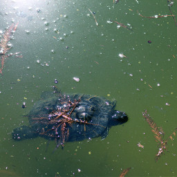 freetoedit turtle swamp lake animl