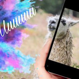 freetoedit ircllama llama