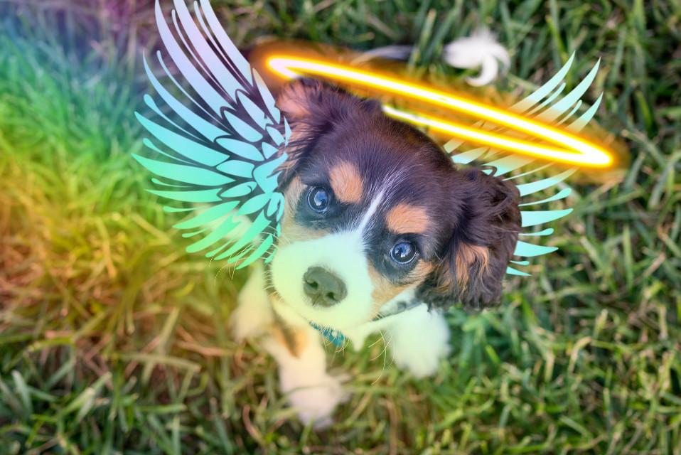 #freetoedit #angelpup #puppyday
