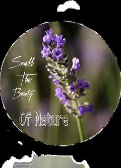 freetoedit sclavender lavender