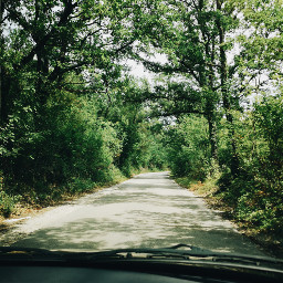 freetoedit roadtriptv road forrest trees