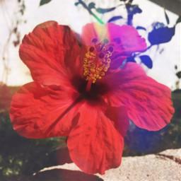 florido freetoedit