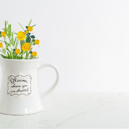 yellowflowerbrush plant flower picsart photography