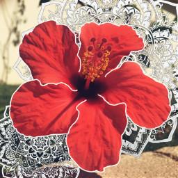freetoedit flowers flower mandala mandalas