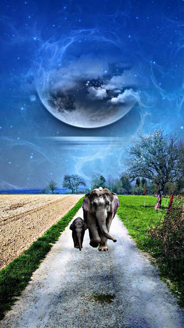 #freetoedit #elephants#fantasy#myedit#myart#madewithpicsart