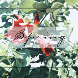freetoedit madewithpicsart spring colorful flower