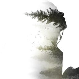 freetoedit silhoutte trees forrest surreal