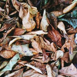 freetoedit fall leaves fallcolors