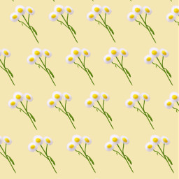 background mydrawing springflowers pastel daisies freetoedit