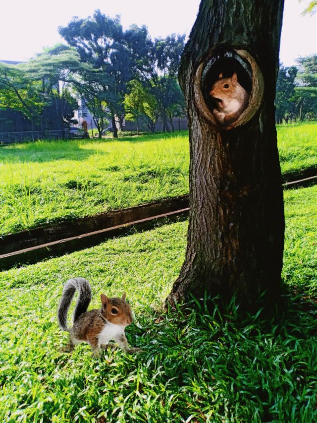 #freetoedit #myclick📷 #photography #squirrel  #editedbyme #madewithpicsart @pa@freetoedit