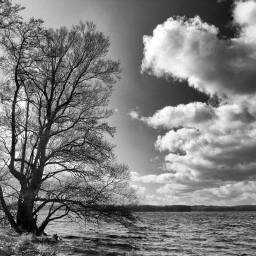 blackandwhite nature photography myphoto tree