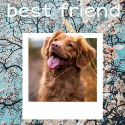 freetoedit bestfriend dogsofpicsart petsandanimals puppystickerremix
